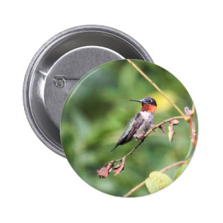 Ruby-throated Hummingbird Buttons