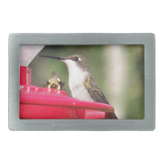 Ruby Throated Hummingbird Belt Buckle