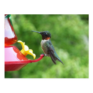 Ruby Throated Hummingbird Bird Photography Postcard