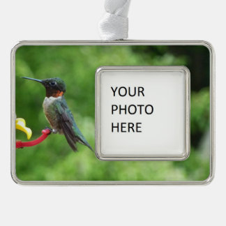 Ruby-Throated Hummingbird Bird Photography Silver Plated Framed Ornament