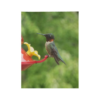 Ruby-Throated Hummingbird Bird Photography Wood Poster