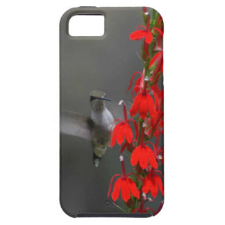 Ruby Throated Hummingbird iPhone 5 Cases