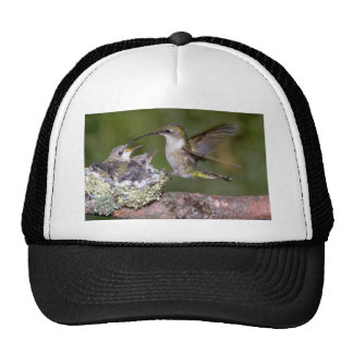 Ruby-throated Hummingbird (female) with young Hats