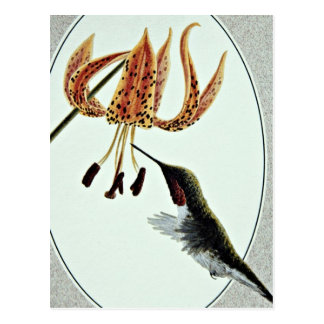 Ruby-throated hummingbird  flowers postcards