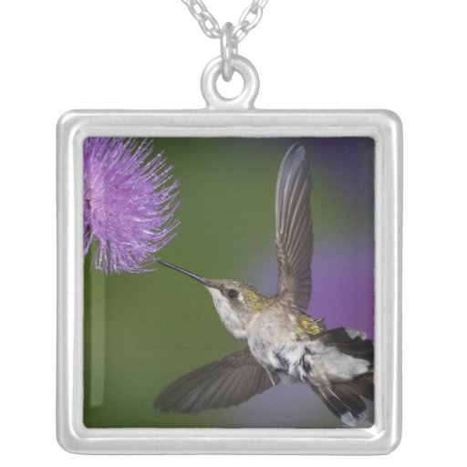 Ruby-throated hummingbird in flight at thistle 2 custom necklace