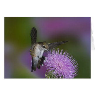 Ruby-throated hummingbird in flight at thistle 3 greeting card