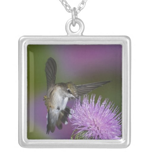 Ruby-throated hummingbird in flight at thistle 3 custom necklace