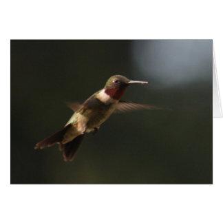 Ruby Throated Hummingbird In Flight Greeting Cards