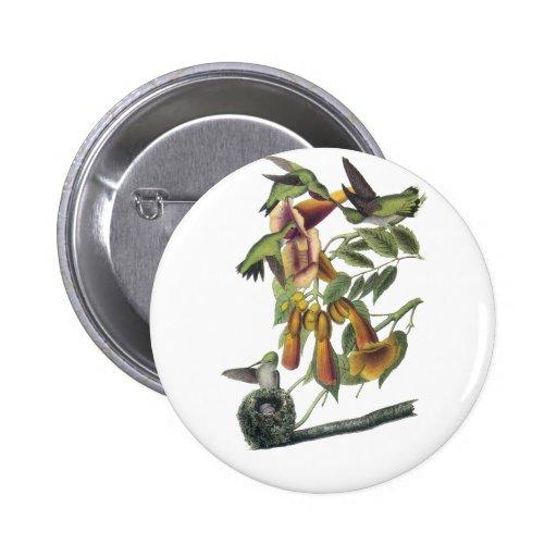 Ruby-throated Hummingbird, John Audubon Pinback Buttons