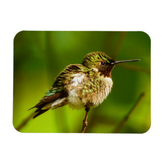 Ruby-Throated Hummingbird Magnet