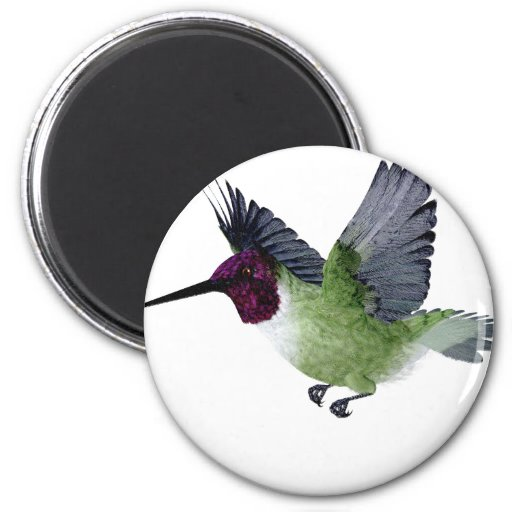 Ruby Throated Hummingbird Male Magnets