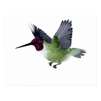 Ruby Throated Hummingbird Male Postcard