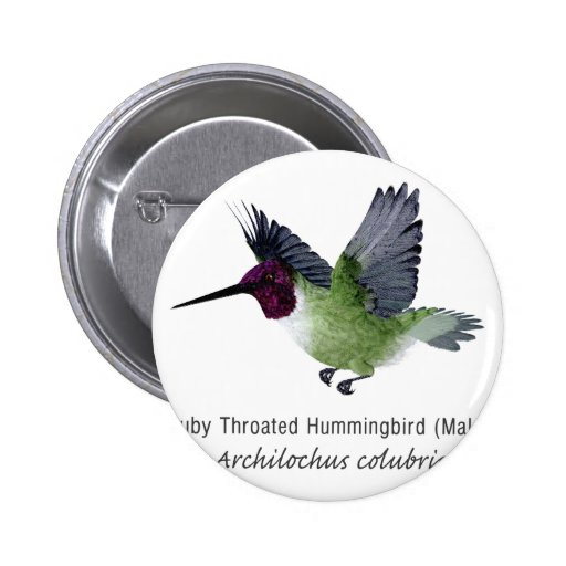 Ruby Throated Hummingbird Male with Name Buttons