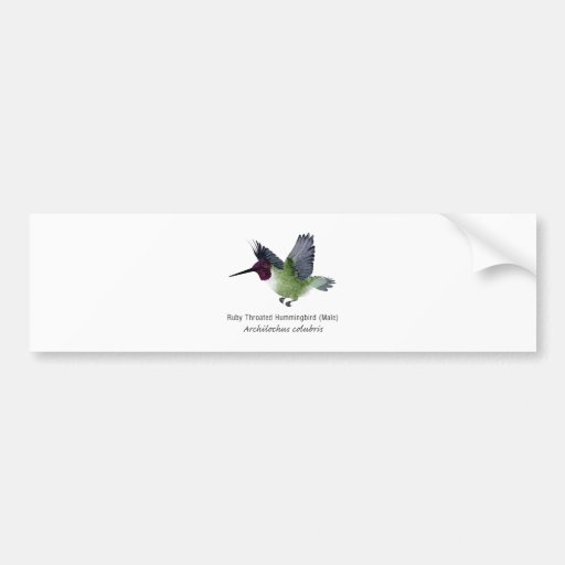 Ruby Throated Hummingbird Male with Name Bumper Sticker