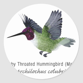 Ruby Throated Hummingbird Male with Name Round Sticker