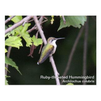 Ruby-throated Hummingbird Postcard