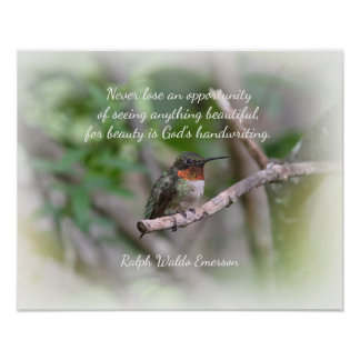 Ruby-throated Hummingbird Poster
