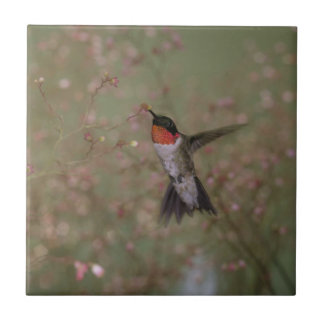Ruby Throated Hummingbird. Small Square Tile