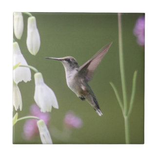Ruby-throated Hummingbird Small Square Tile