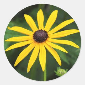 Rudbeckia hirta round sticker