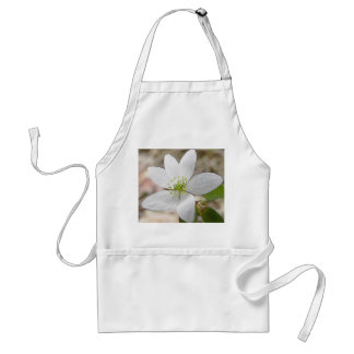 Rue Anemone - Thalictrum thalictroides Aprons