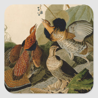 Ruffed Grouse Game Bird Audubon Square Sticker