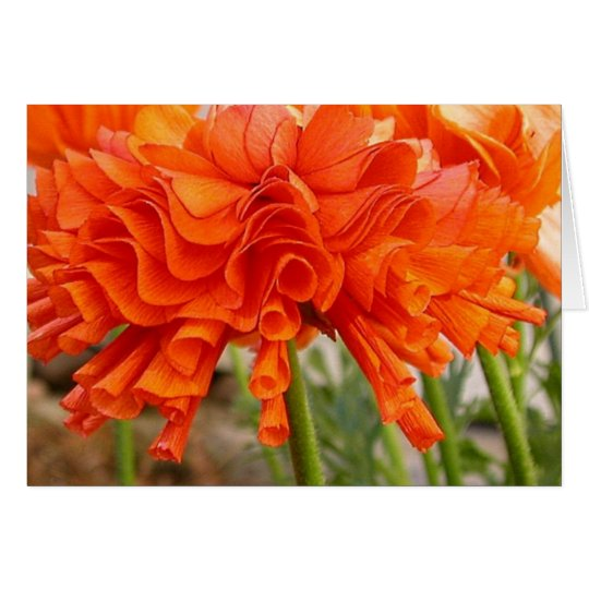 Ruffled ranunculus card
