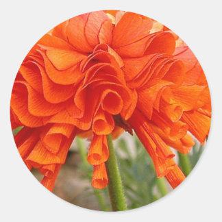 Ruffled Ranunculus Classic Round Sticker