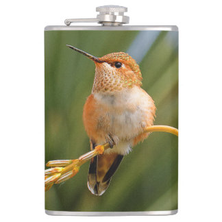 Rufous Hummingbird at Rest Hip Flask