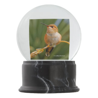 Rufous Hummingbird at Rest Snow Globe