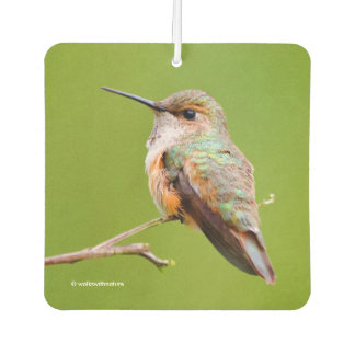 Rufous Hummingbird Sitting in the California Lilac Car Air Freshener