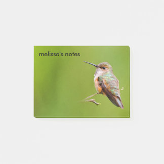 Rufous Hummingbird Sitting in the California Lilac Post-it Notes