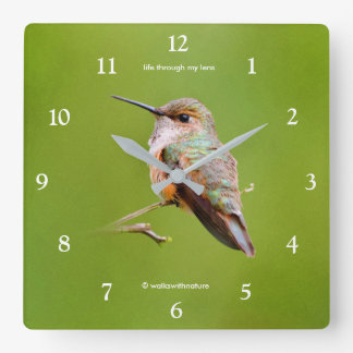 Rufous Hummingbird Sitting in the California Lilac Square Wall Clock