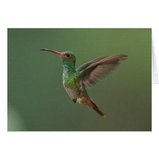 Rufous-tailed Hummingbird Card