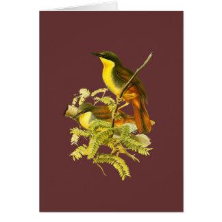 Rufous-vented Laughingthrush Card