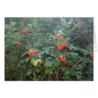 Rugosa Rose Hips Card