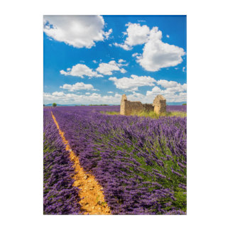 Ruin in Lavender Field, France Acrylic Wall Art