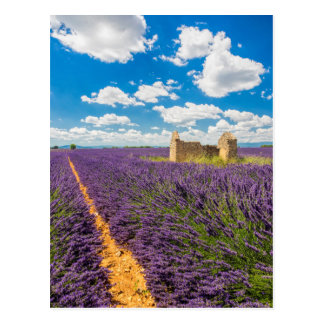 Ruin in Lavender Field, France Postcard