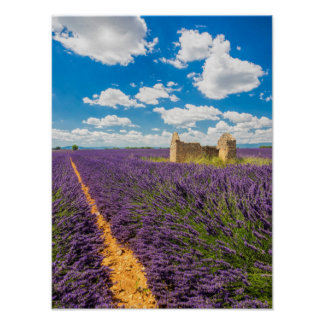 Ruin in Lavender Field, France Poster