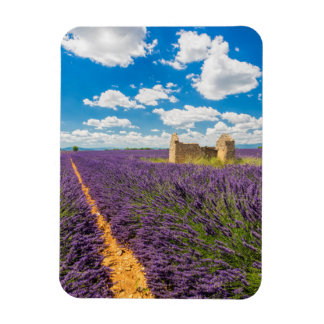 Ruin in Lavender Field, France Rectangular Photo Magnet