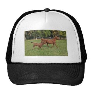 Running Arabian Horses - Mom and Foal Cap