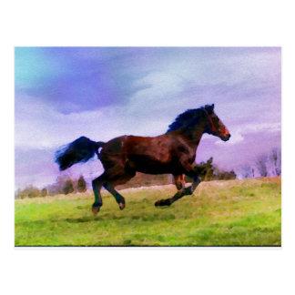 Running Brown Horse Pony Foal Western Equestrian Postcard