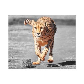 running cheetah canvas print