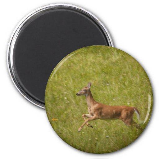 Running Deer Magnet