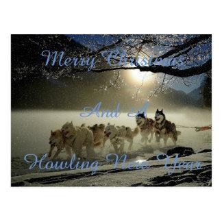 Running dogs in snow postcard