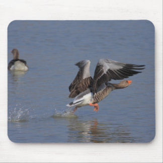 Running Greylag Goose Mouse Pad