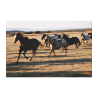 Running Horses Gallery Wrapped Canvas