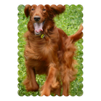 Running Irish Setter Announcement