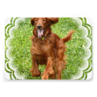 Running Irish Setter Custom Invitation