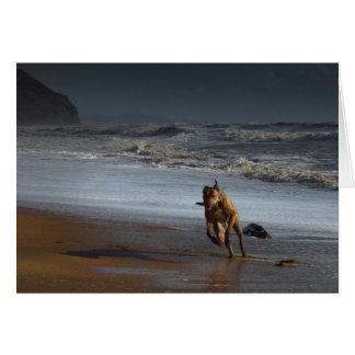 Running Lurcher Greyhound on Beach Card